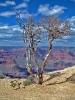 tree1web.jpg